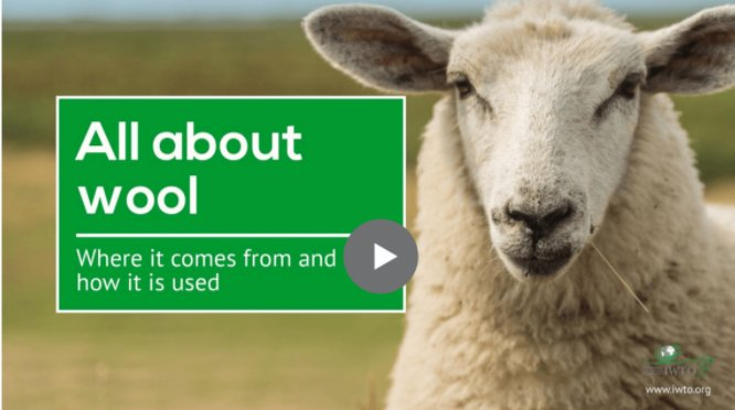 All about wool video image